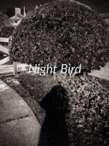 Night Bird 1