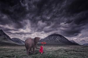 elephant-1873439_1920